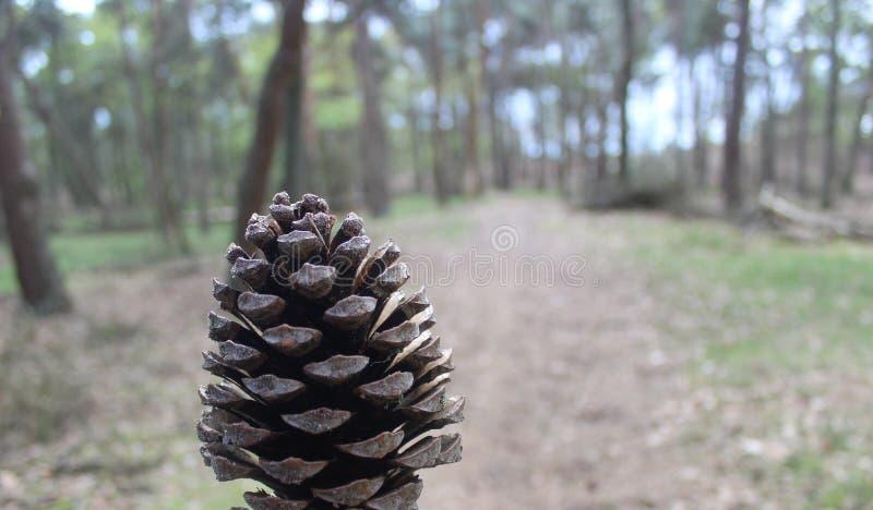 Pigna con gli alberi confusi su fondo immagine stock libera da diritti