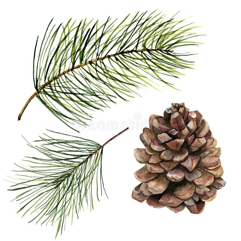 Pigna dell'acquerello ed insieme del ramo dell'abete Ramo dipinto a mano del pino con il cono isolato su fondo bianco Clip botani illustrazione di stock