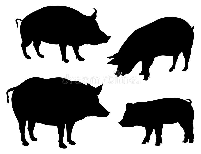 Pigs. Abstract vector illustration of various pigs silhouettes