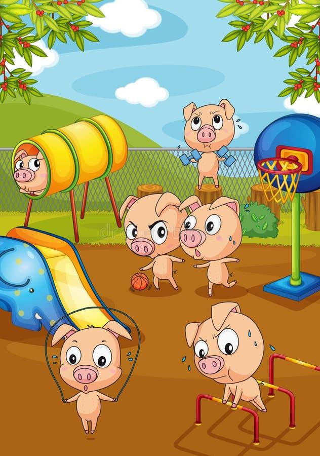 Pigs vektor illustrationer