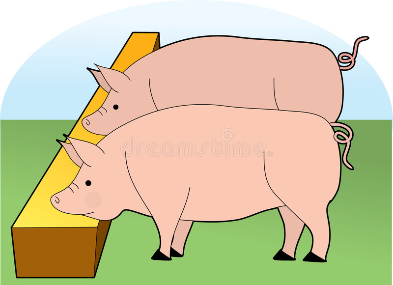 Pigs Eating. From a trough stock illustration