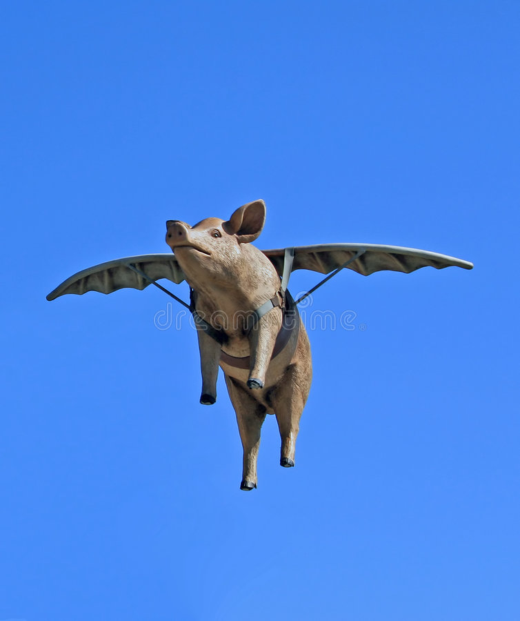When Pigs Fly stock photos