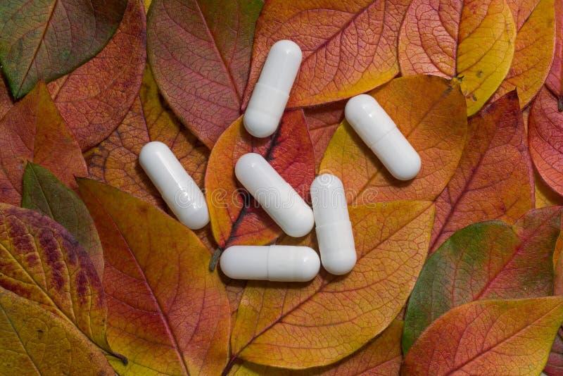 Pigułki na jesień liściach obrazy stock