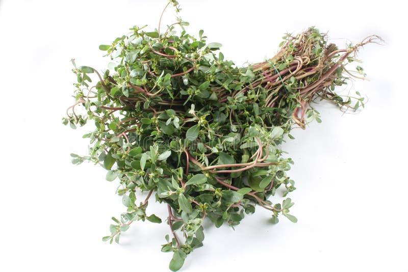 Pigweed, Gemüse oder Gesundheit vege lizenzfreie stockbilder