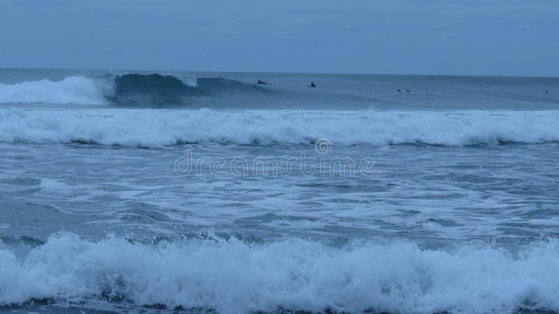 Piha海滩,新西兰 免版税库存照片