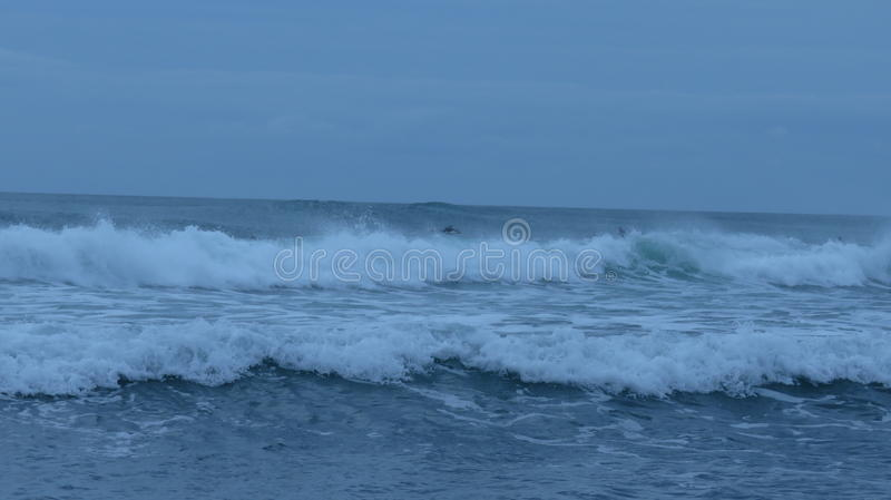Piha海滩,新西兰 库存图片