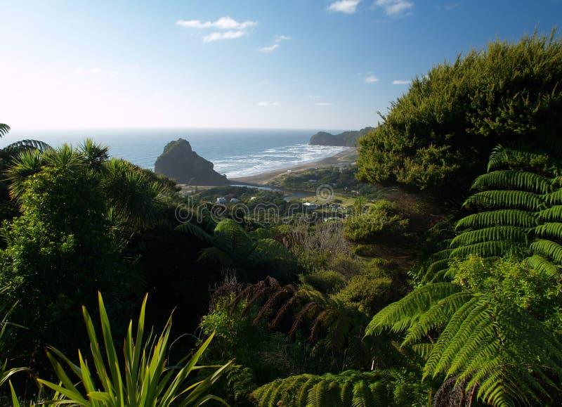 Piha beach stock image