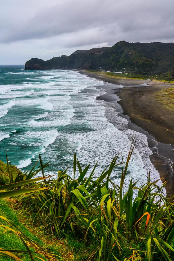 Piha Beach with Lion Rock, New Zealand. New Zeland iconic, famous beaches concept. Panoramic scenic landscape view of surfers popular Piha Beach and Lion Rock in stock photo