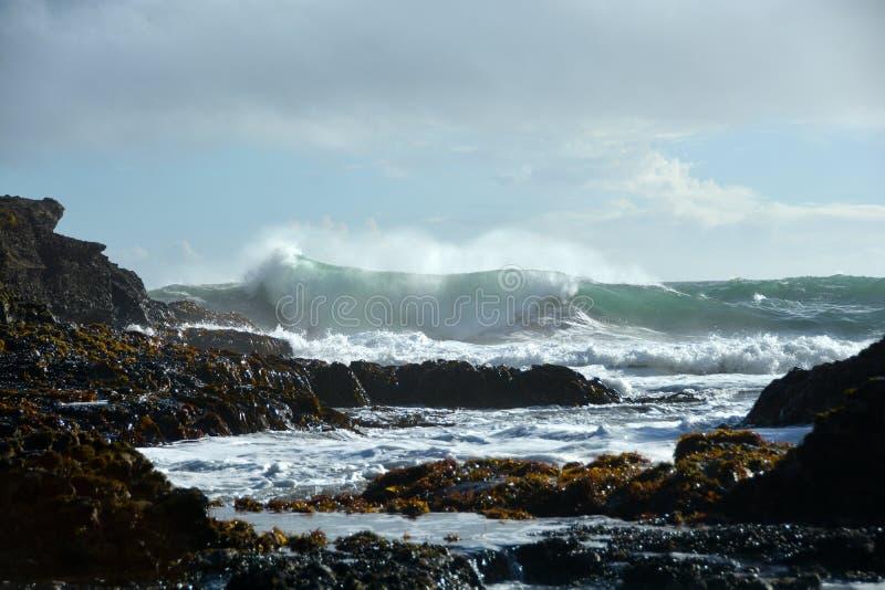 Piha beach in New Zealand stock images