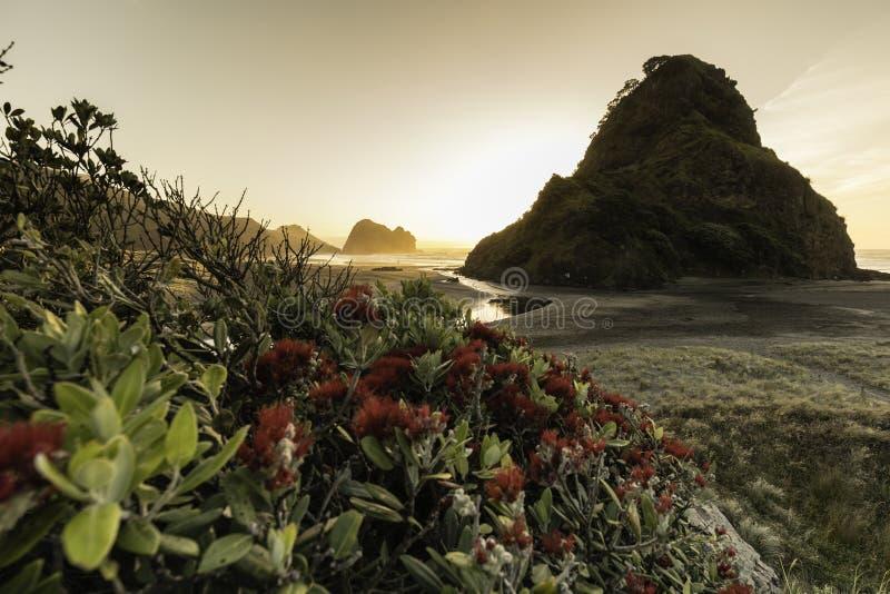 Piha Beach, NZ royalty free stock image