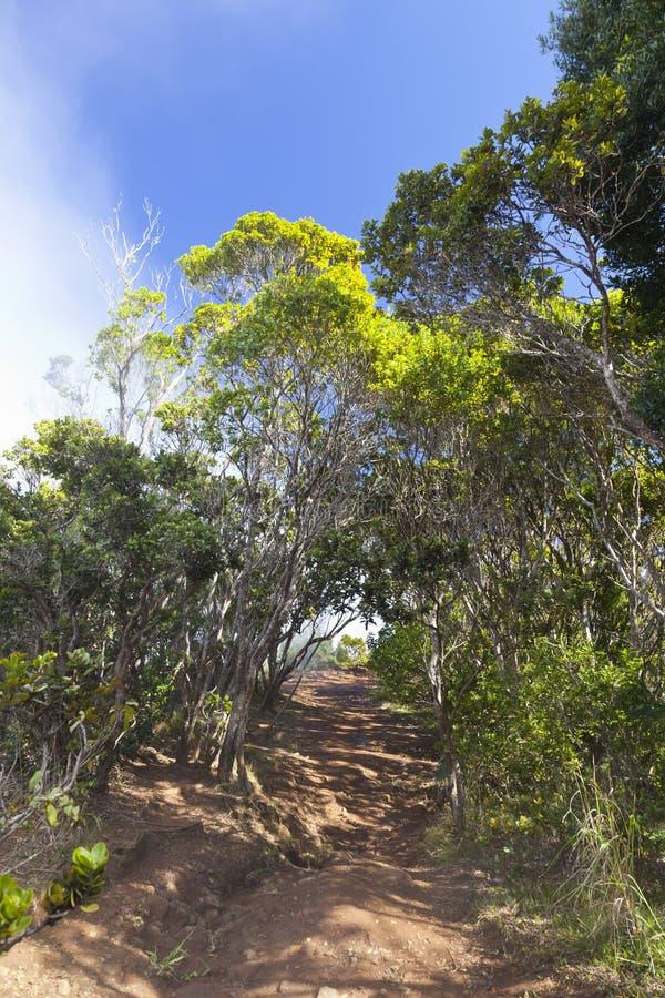 Pihea足迹,考艾岛,夏威夷 免版税库存图片