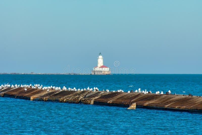 Pijler met Zeemeeuwen op Meer Michigan in Chicago met een Vuurtoren veel weg in de afstand royalty-vrije stock afbeeldingen