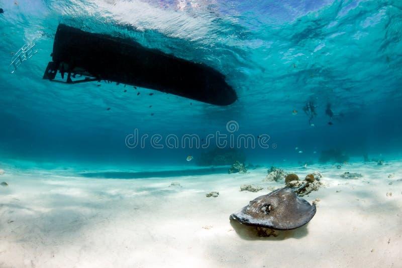 Pijlstaartroggen onder een boot royalty-vrije stock afbeeldingen