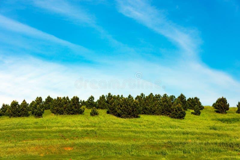 pijnbomen royalty-vrije stock afbeelding