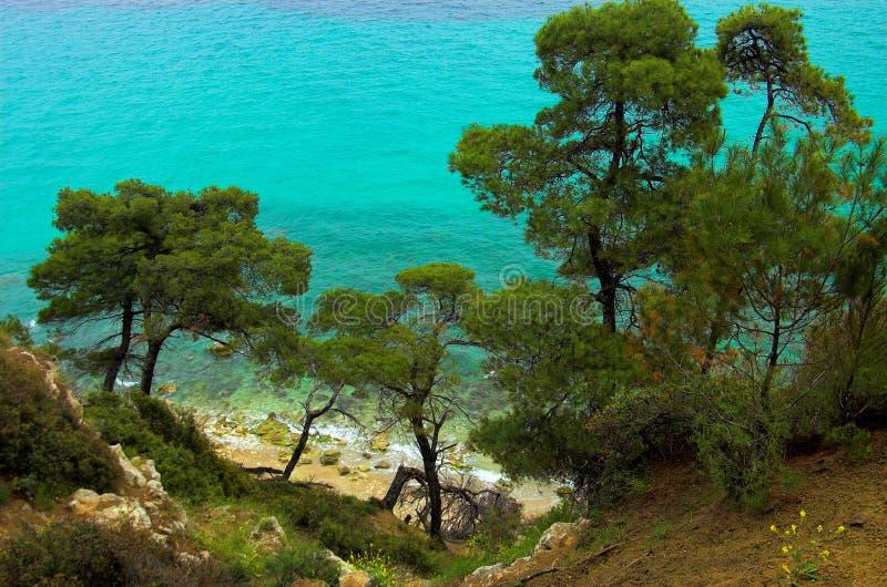 Pijnbomen dichtbij de kust royalty-vrije stock afbeeldingen