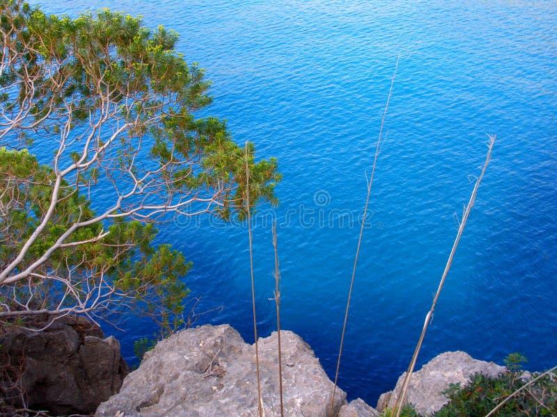 Pijnbomen en stenen dichtbij het overzees stock fotografie