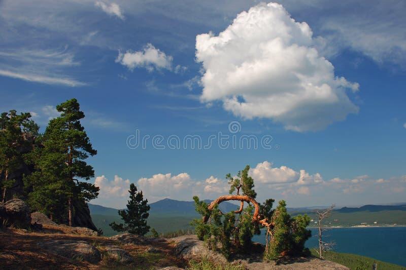Pijnbomen en wolken royalty-vrije stock afbeeldingen
