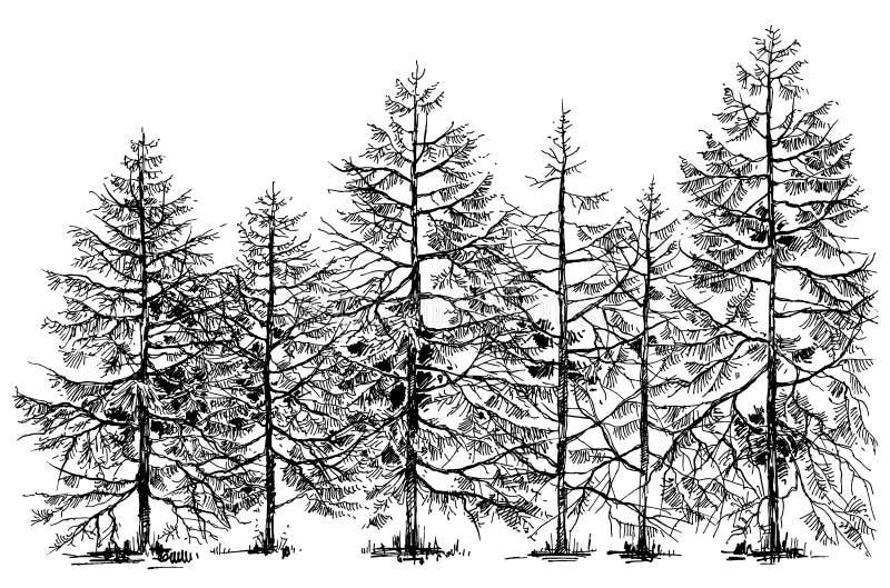 Pijnboom bosgrens vector illustratie