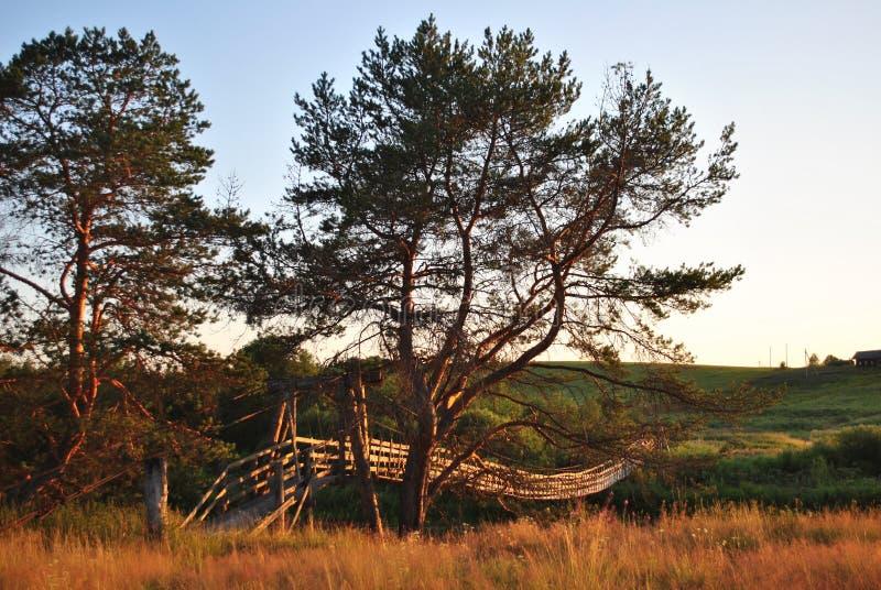 Pijnboom en hangende brug bij zonsondergang royalty-vrije stock foto
