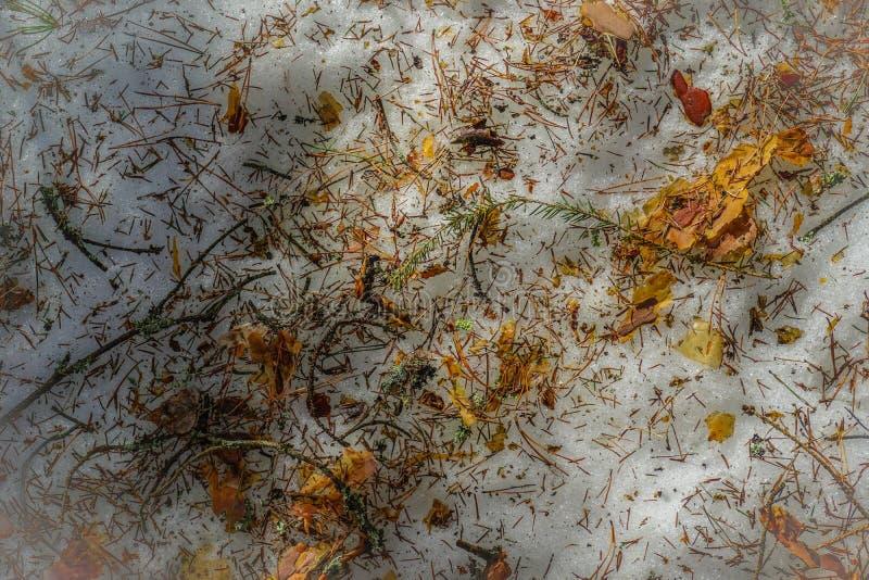 Pijnboom en nette naalden, schors en takjes van bomen, stukken van groen mos op smeltende sneeuw stock foto