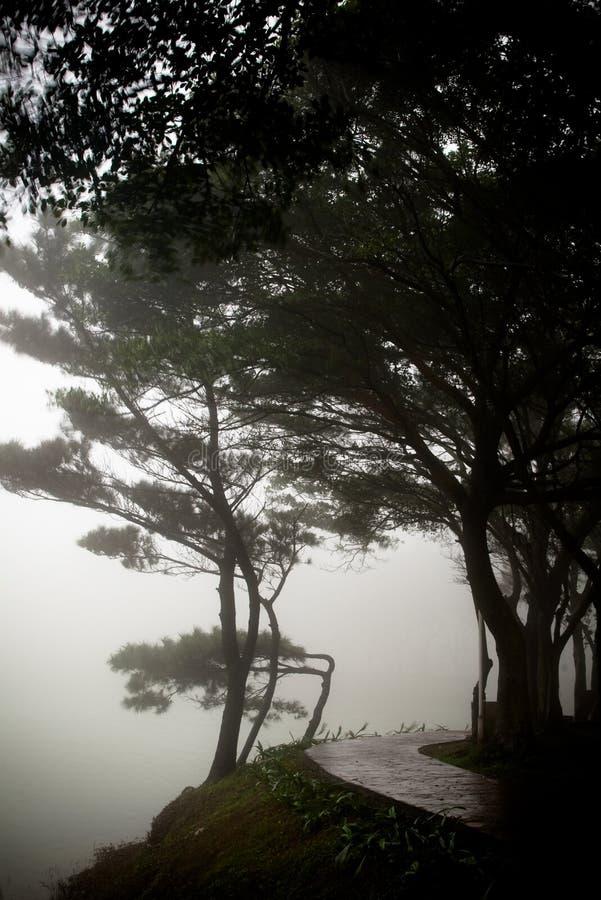 Pijnboom in het regenen met mist royalty-vrije stock afbeelding