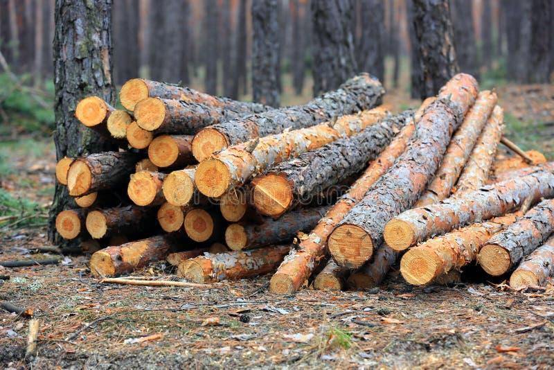 Pijnboom houten logboeken stock foto