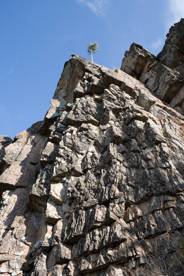 Pijnboom op rots 1 stock foto's