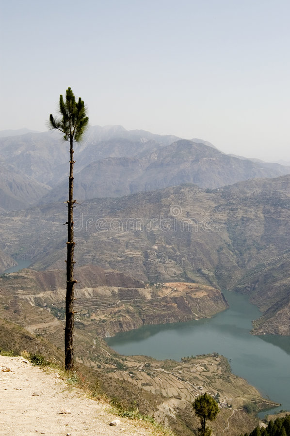 Pijnboom over rivier Ganga royalty-vrije stock afbeeldingen