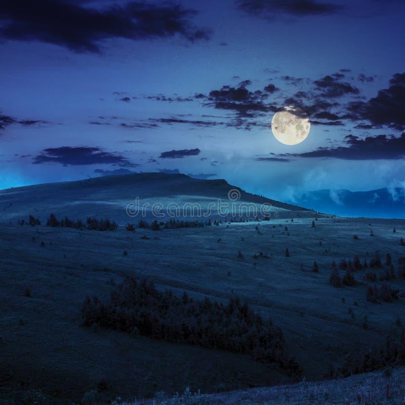 Pijnboombomen dichtbij vallei in bergen op helling bij nacht stock afbeelding