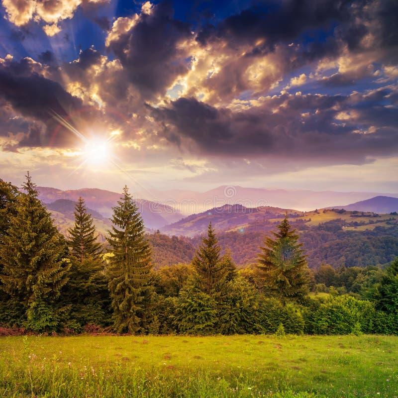 Pijnboombomen dichtbij vallei in bergen op helling onder hemel met royalty-vrije stock afbeelding