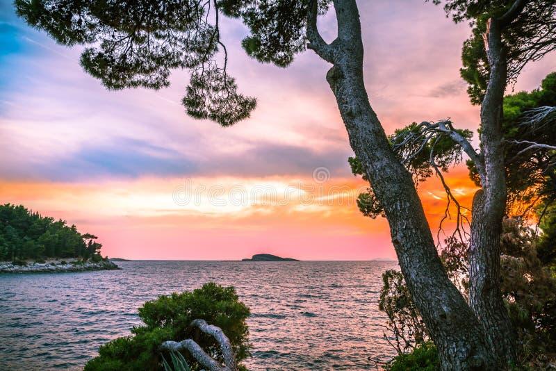 Pijnboombomen die naar het overzees voor zonsondergang leunen royalty-vrije stock foto