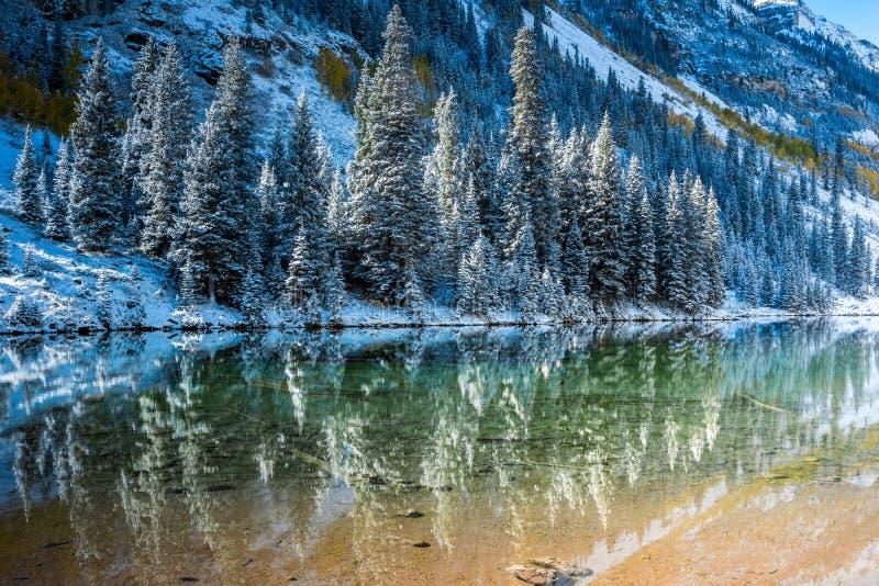 Pijnboombomen in sneeuw op weerspiegelend meer stock foto's