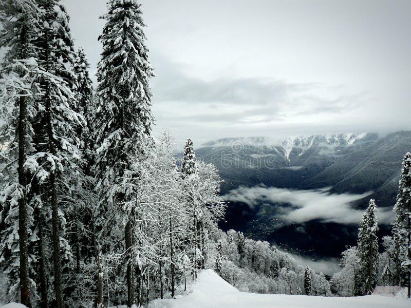 Pijnboombomen in sneeuw, sneeuwvallei royalty-vrije stock fotografie