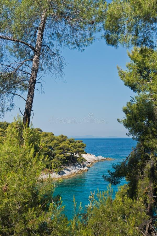 Pijnboomboom op een rots over glashelder turkoois water, Kaap Amarandos bij Skopelos-eiland stock afbeeldingen