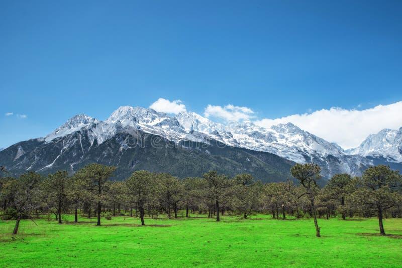 Pijnboombos en Jade Dragon Snow Mountain, Lijiang, Yunnan China stock foto's
