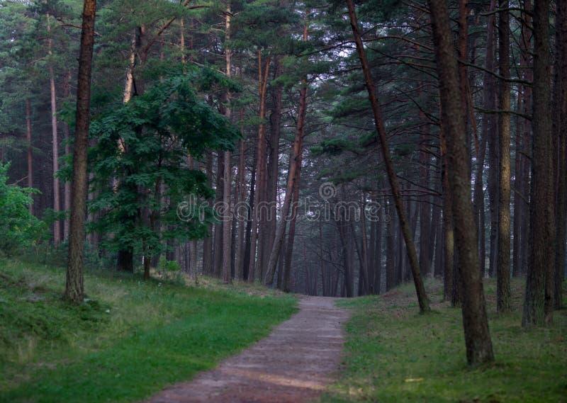 Pijnboombos in Litouwen met Weg en Gras royalty-vrije stock afbeeldingen
