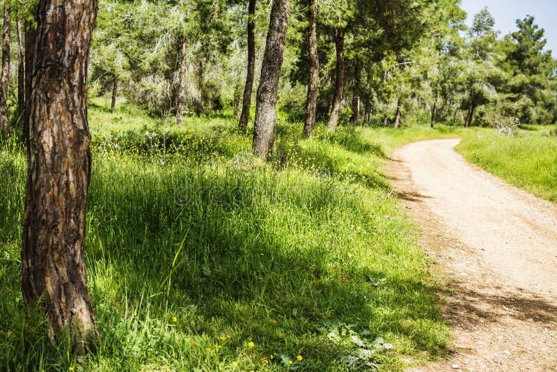 Pijnboombos met groen gras en thekking weg op de zonnige zomer D stock afbeeldingen