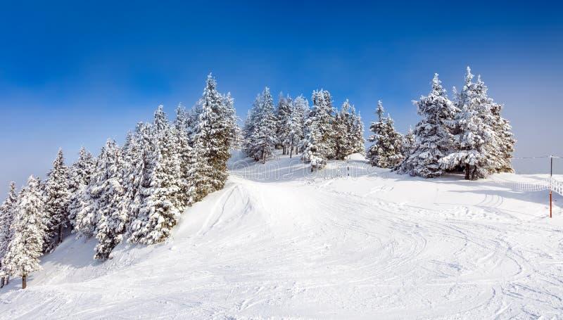 Pijnboombos in sneeuw wordt behandeld die stock fotografie