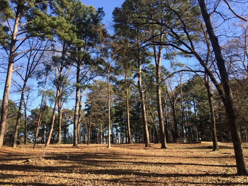 Pijnboomhout royalty-vrije stock foto