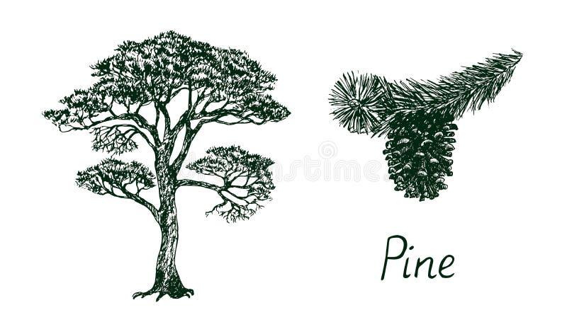 Pijnboomsilhouet en tak met kegel, met de hand getekende doodle, schets, zwarte en witte vector vector illustratie