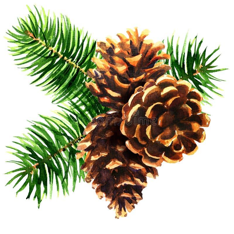 Pijnboomtak met drie bruine kegels, Kerstmisdecoratie, Nieuwjaarsamenstelling, geïsoleerd decorelement, getrokken hand stock foto
