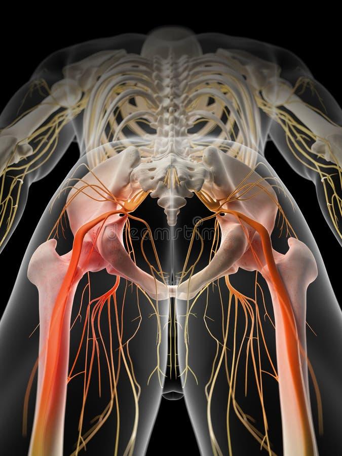 Pijnlijke heup- zenuw vector illustratie