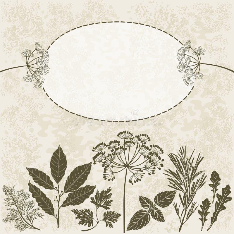 Pikantność i ziele Ilustracja z miejscem dla teksta, może używać ilustracji