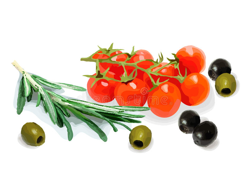 pikantność warzywa również zwrócić corel ilustracji wektora 1 życie wciąż ilustracji