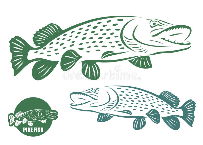 Download Pike fish stock vector. Image of fins, catch, graphic - 27896224