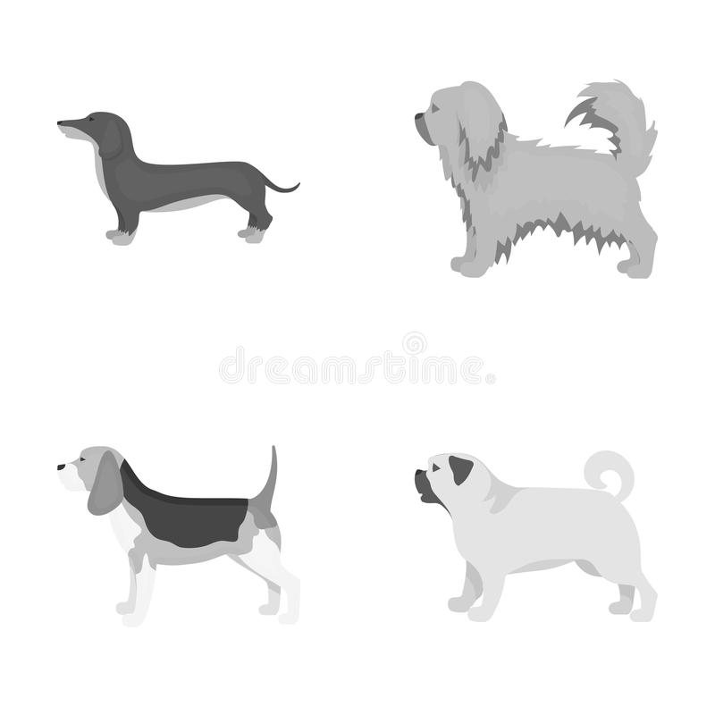 Pikinise, dachshund, pug, peggy. Dog breeds set collection icons in monochrome style vector symbol stock illustration royalty free illustration