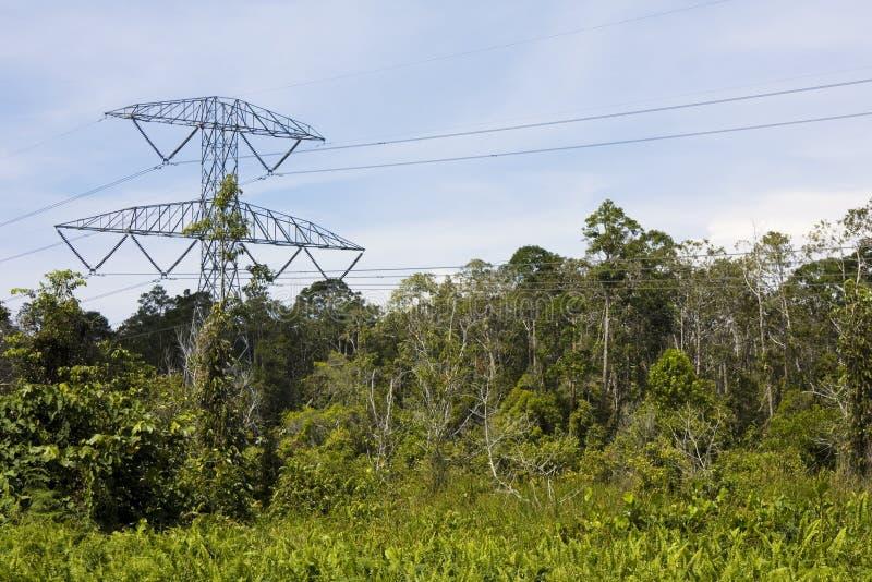 Pilão da eletricidade na selva, Brunei foto de stock royalty free
