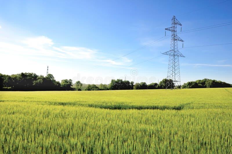 Pilón de la electricidad en campo de la cebada foto de archivo libre de regalías