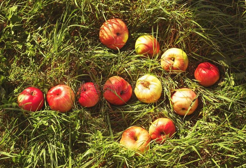 Pil från äpplen på gräs arkivfoto