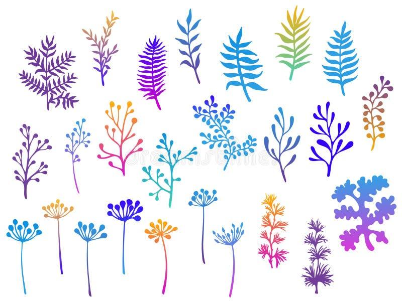 Pil- och palmträdfilialer, ormbunke fattar, lavmossa, mistel, välsmakande gräsörter, illustrationer för maskrosblommavektor ställ royaltyfri illustrationer